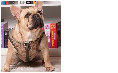 Geschirr für Hunde, camouflage
