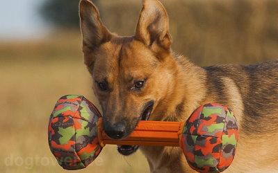 Apportierspielzeug für alle Hunderassen