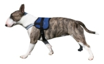 Aqua Coolkeeper Cooling Survival Harness kühlendes Hundegeschirr, Pacific Blue